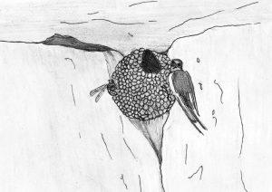 20 El nido de la golondrina
